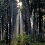 Alerce y sus maestros de la madera