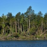 El importante rol de los bosques nativos de la Patagonia