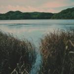 La gran importancia de los humedales en la Patagonia chilena