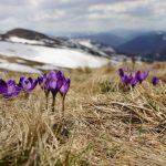 ¿Qué ofrece la Patagonia según la época del año?