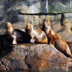 7 cosas que debes saber sobre los lobos marinos de la Patagonia