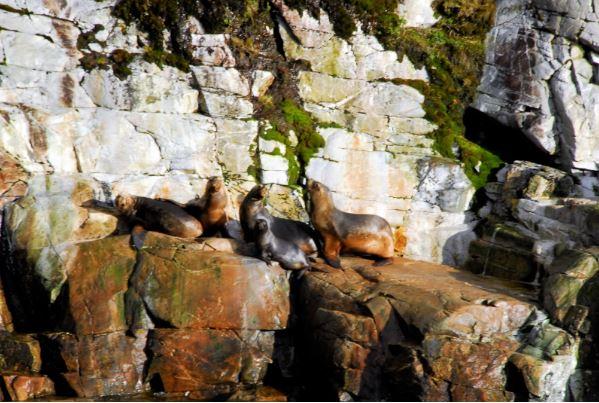 lobos marinos patagonia